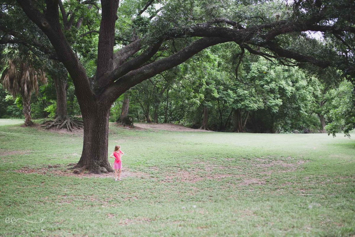 big_oak_tree_by Eileen Critchley