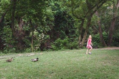 ducks_walking_following | follow the leader_by Eileen Critchley
