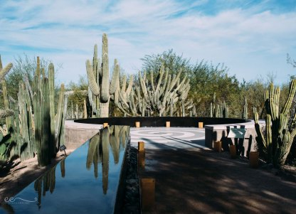 saguaro_cacti_desert_botanical_garden|you can always count on me for your cactus photos_by Eileen Critchley