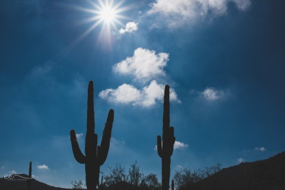 saguaros_silhouette_and_sunburst | saguaros_by Eileen Critchley